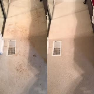 Select Floor Care (10)