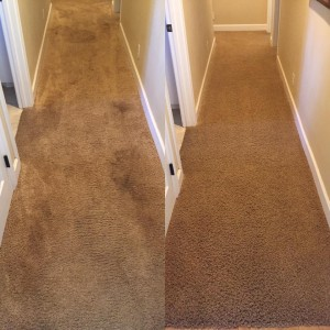 Select Floor Care (6)