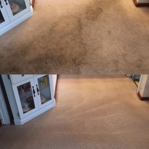 Select Floor Care (7)